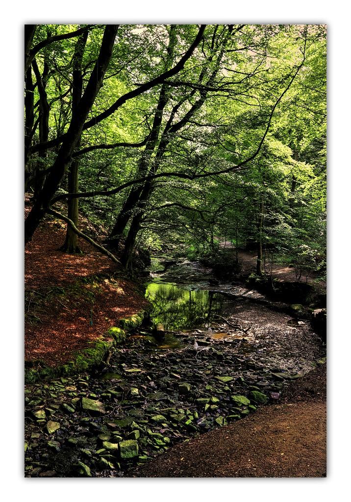 114-woods-roddlesworth-woods-6202.jpg